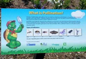 Franklin's Pollinator Station 10
