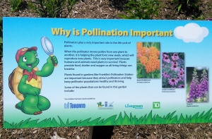 Franklin's Pollinator Station 11